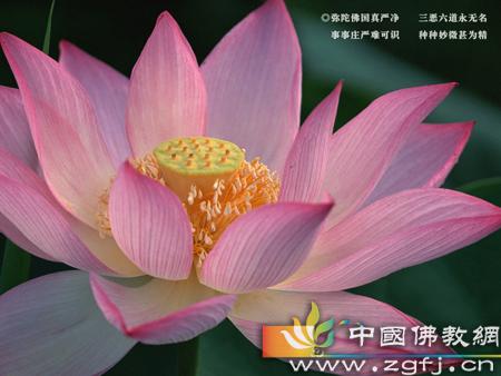 莲花36.jpg
